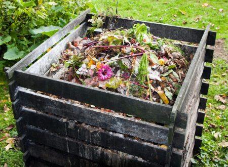 L'organico: umido o organico, una tipologia di rifiuto davvero preziosa!